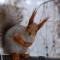 Аватар пользователя maria_levchyk