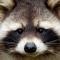 Аватар пользователя kleo_1983_47314