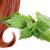 Крапива - бабушкин секрет здоровых волос