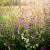 """Природа - источник красоты: в каких травах скрыта роскошь волос? Шампунь ЛАНЬЕР """"Травяной Коктейль"""""""