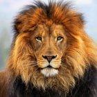 Аватар пользователя lion-79