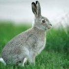 Аватар пользователя bugs_bunny